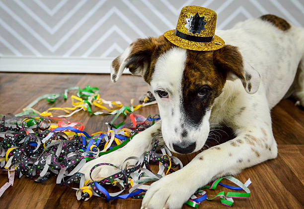 new year's puppy laying down with hat and streamers - silvester mit hund stock-fotos und bilder
