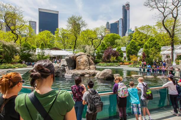 New York - Central Park Scenes - Central Park Zoo stock photo