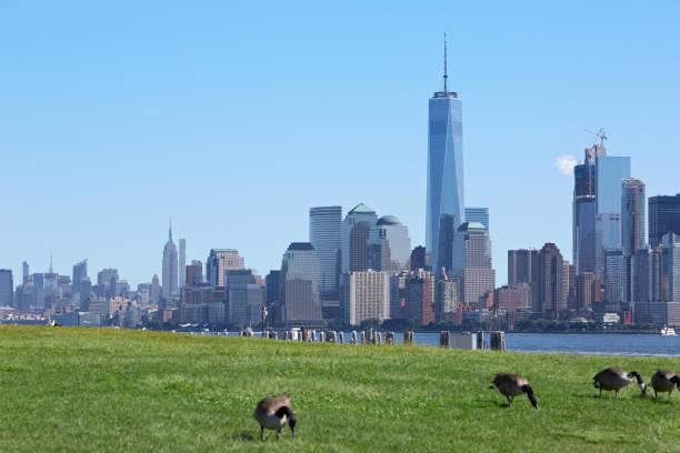 skyline von new york mit grünen wiese und kanadagänse - freistaat stock-fotos und bilder