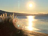 Iconic Native New Zealand / Aotearoa Flora by Sunset.