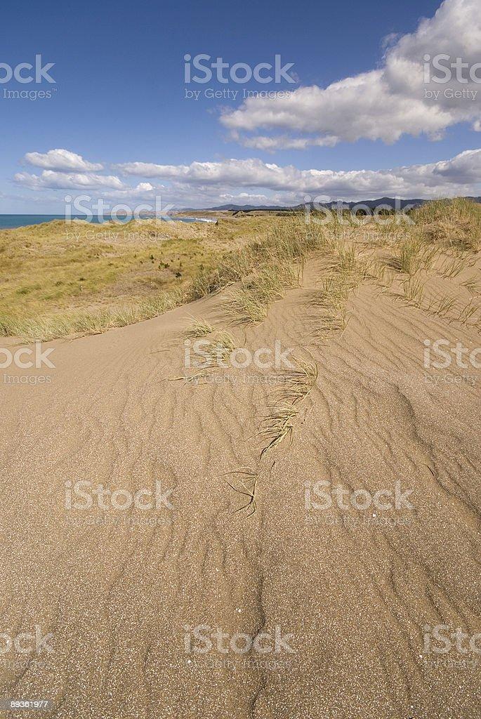 New Zealand Beach royalty free stockfoto