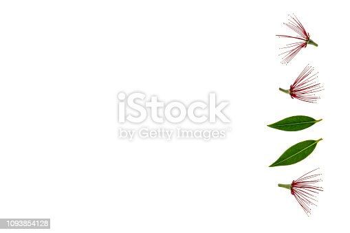 Istock Red Metrosideros Excelsa Flowers Isolated On White Background