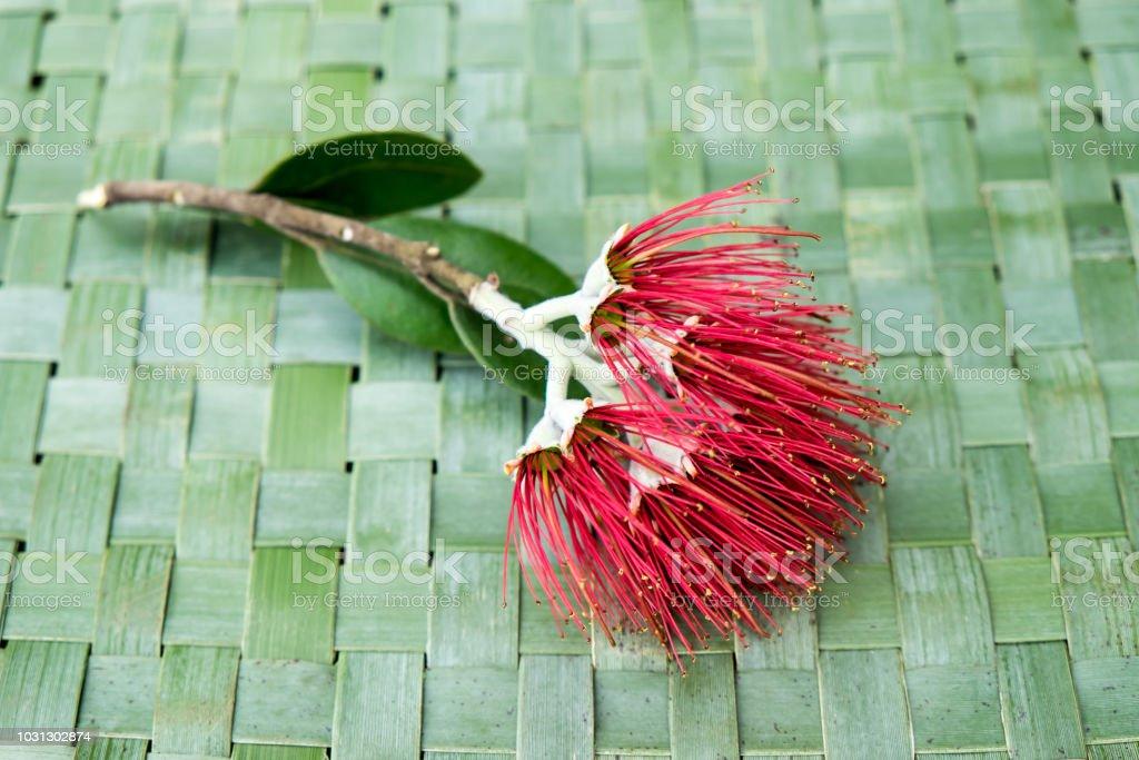 New Zealand Christmas Tree or Pohutukawa flower on woven green flax kete background - kiwiana xmas theme stock photo