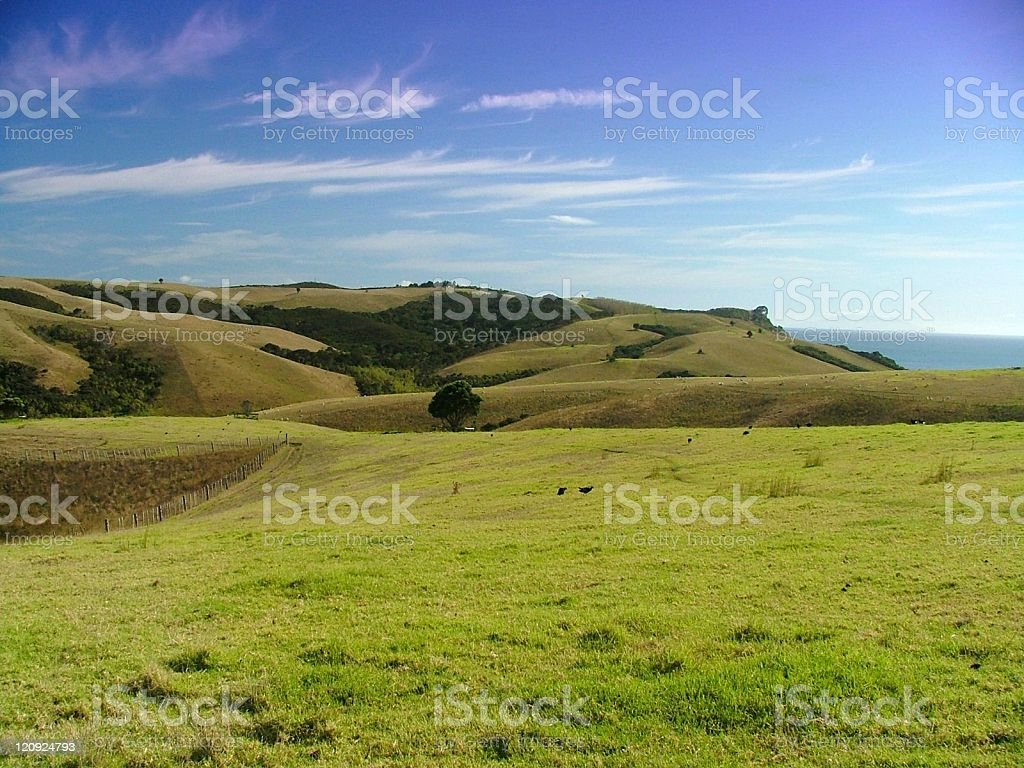 New Zealand Countryside royalty-free stock photo
