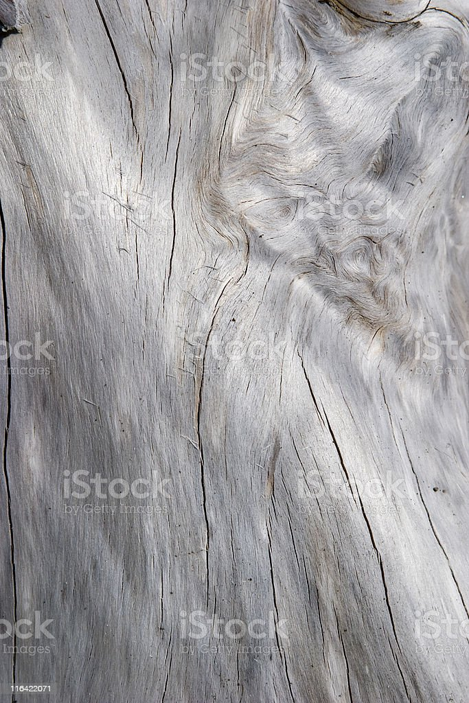 new zealand driftwood stock photo