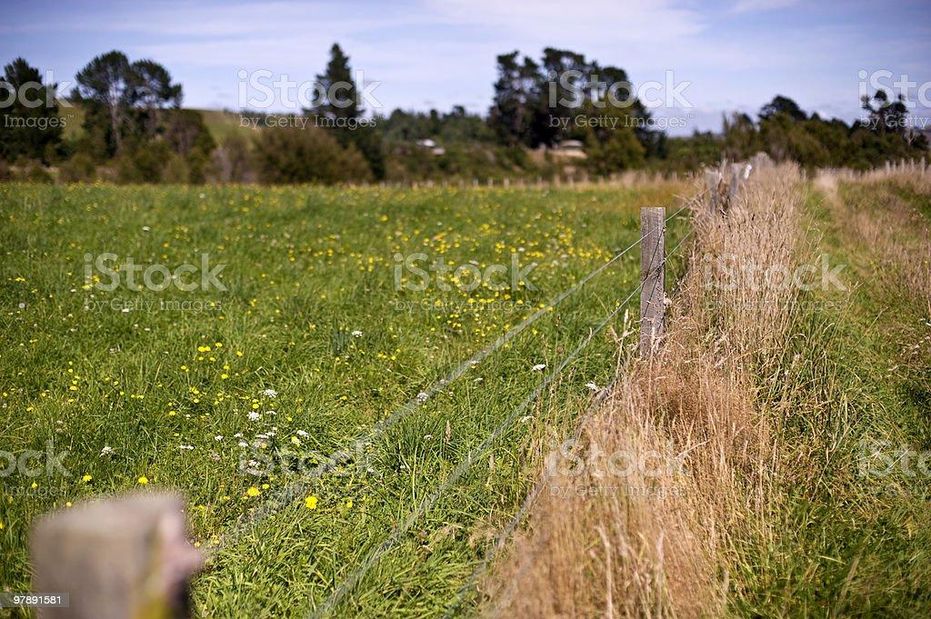New Zealand farm land royalty-free stock photo