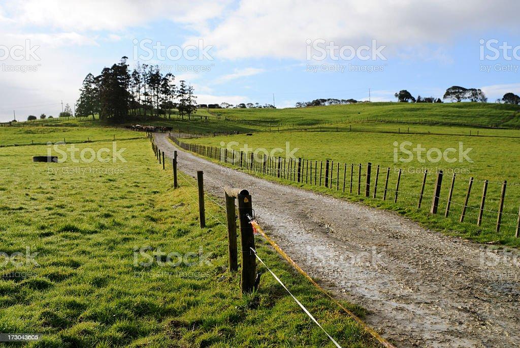 New Zealand Farm Track royalty-free stock photo