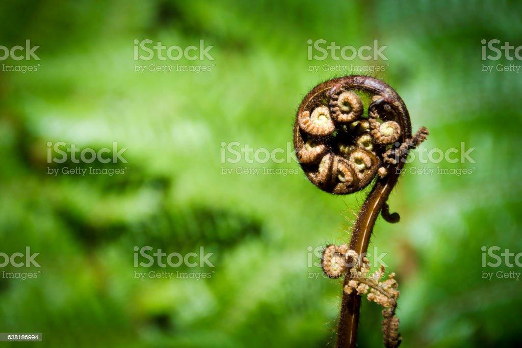 New Zealand fern stock photo