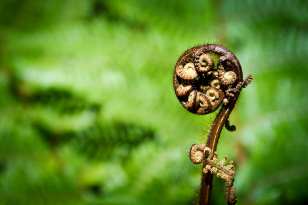new zealand fern - nzgmw2017 stock pictures, royalty-free photos & images