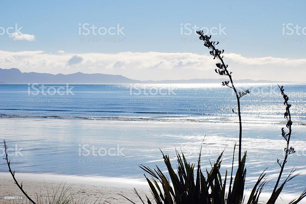 New Zealand Flax (Harakeke) Seascape stock photo