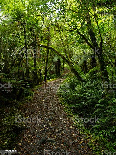 Photo of New zealand forest