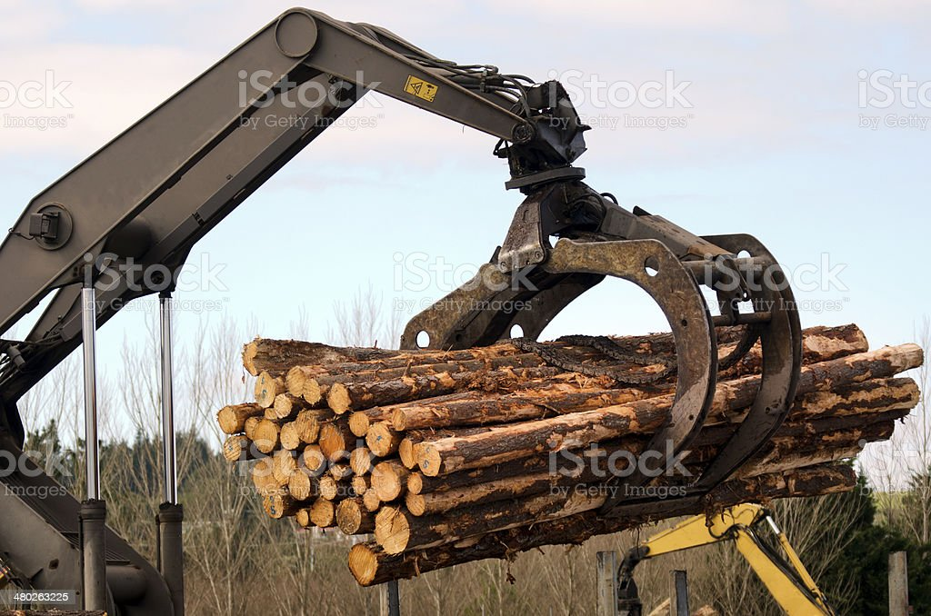 New Zealand Forest Products stock photo