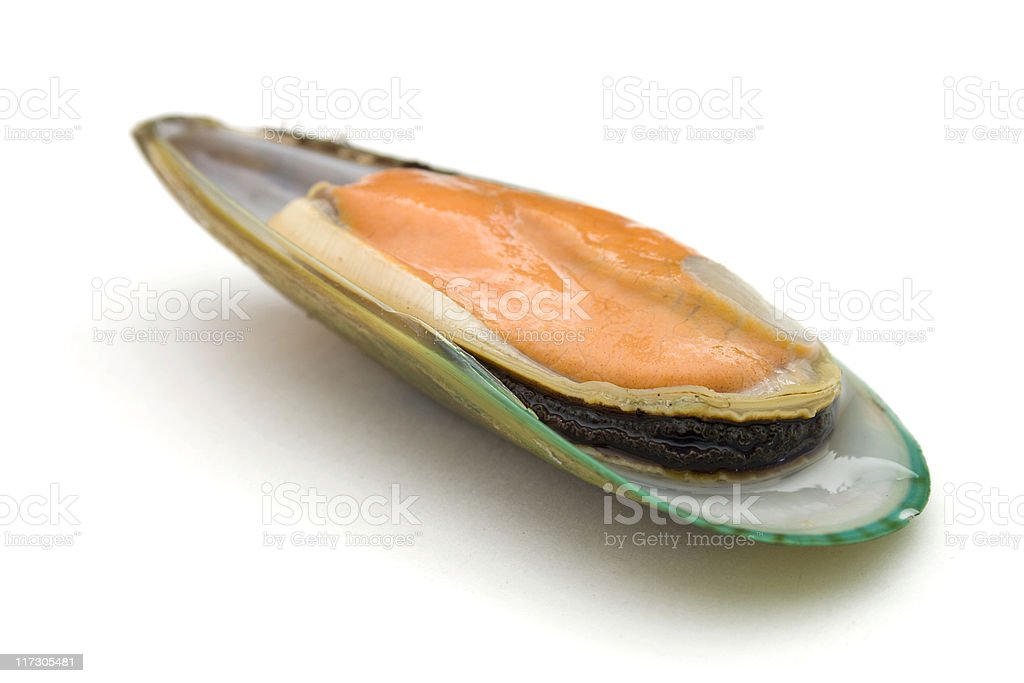 New Zealand green mussel royalty-free stock photo