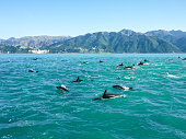 South Island in new Zealand. \nSnorkeling with wild dolphins. Very Magical moments surrounded by hundreds of doplhin