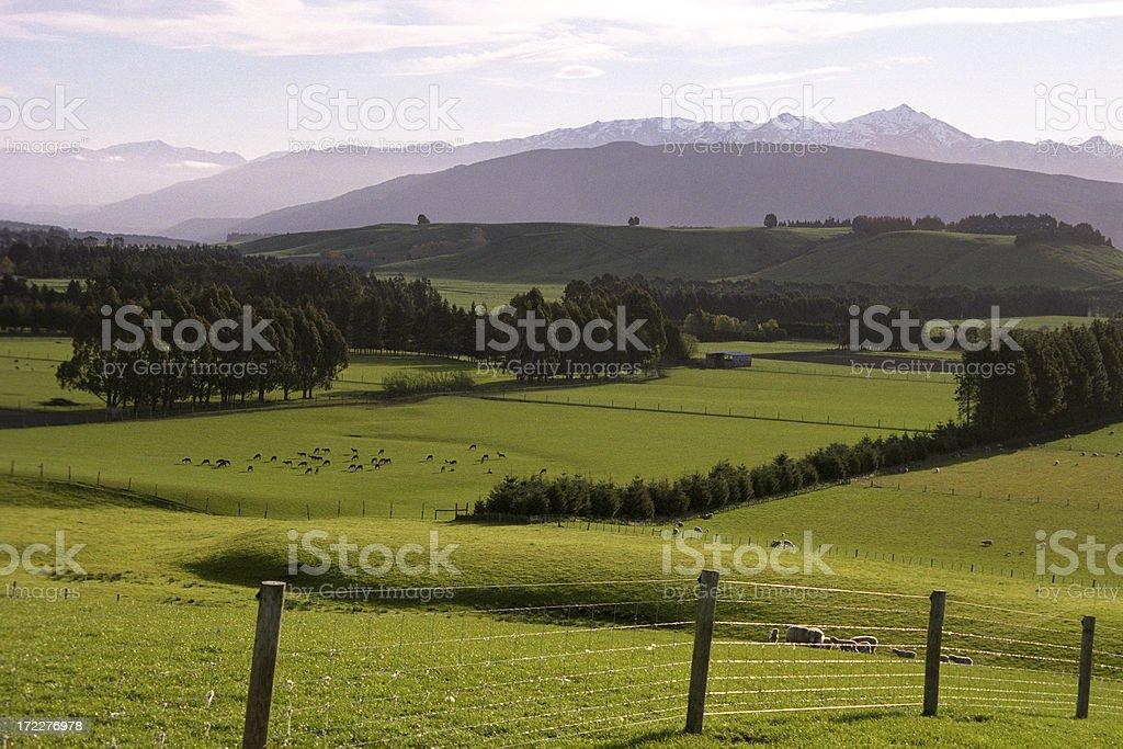 New Zealand pastoral royalty-free stock photo