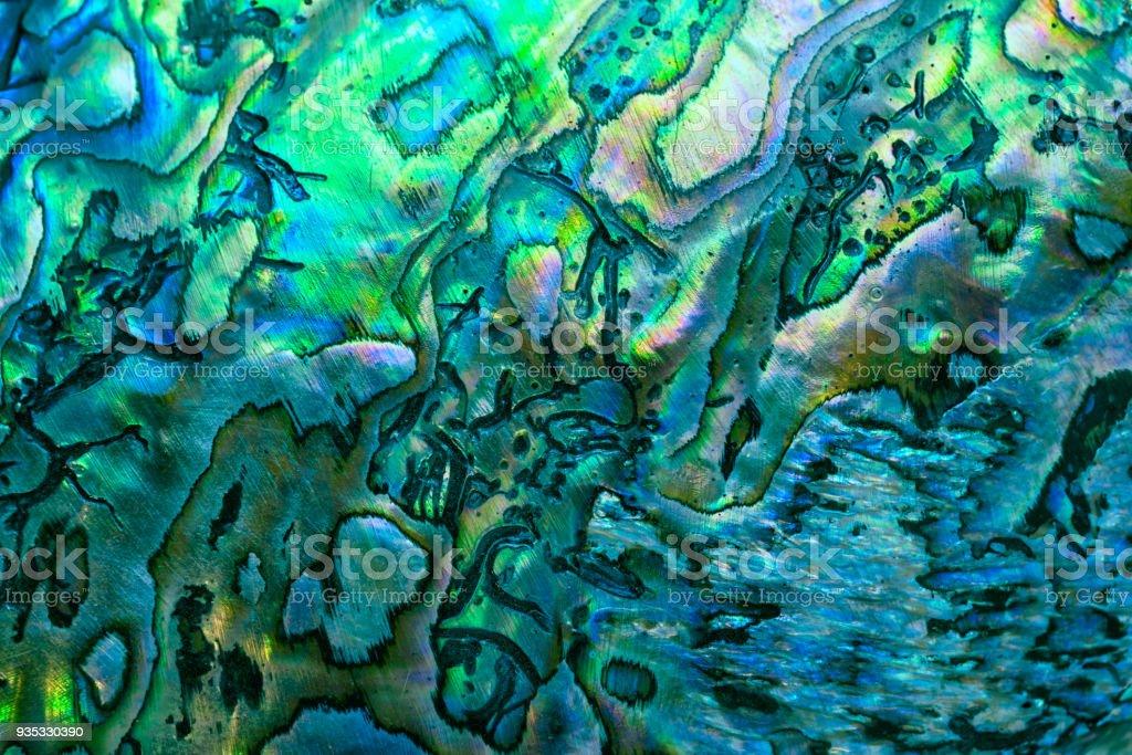 豪華な背景としてクローズ アップしニュージーランド パウア貝 (トコブシ アイリス) ストックフォト