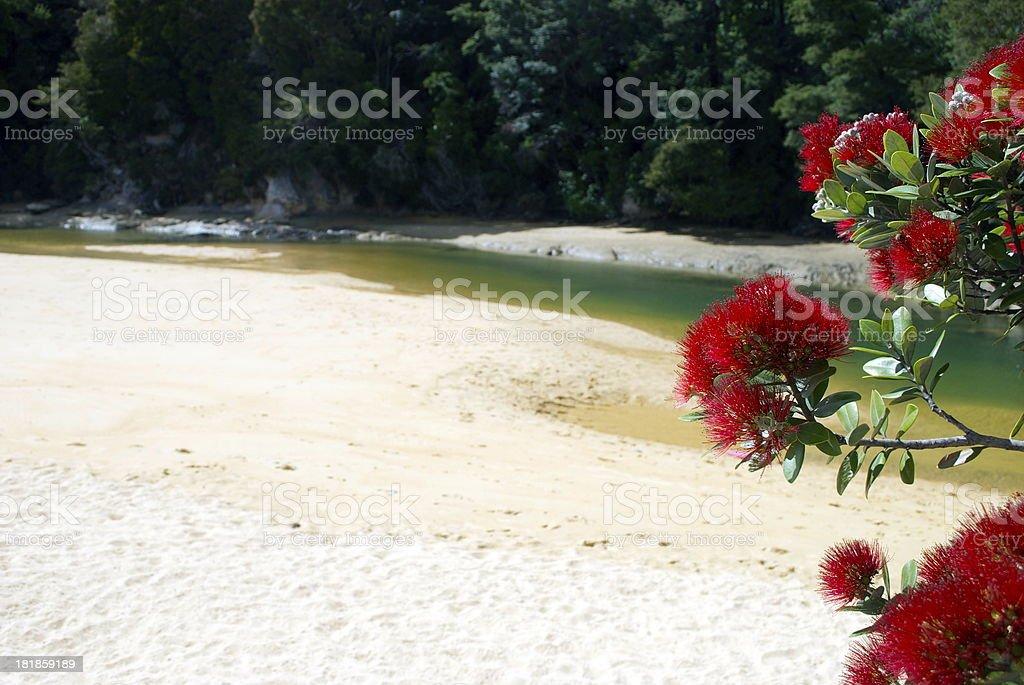 New Zealand Pohutukawa & Seascape royalty-free stock photo