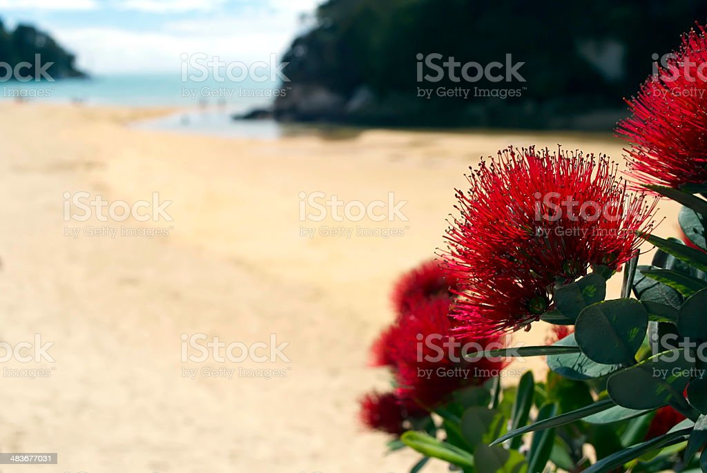 New Zealand Pohutukawa & Seascape stock photo