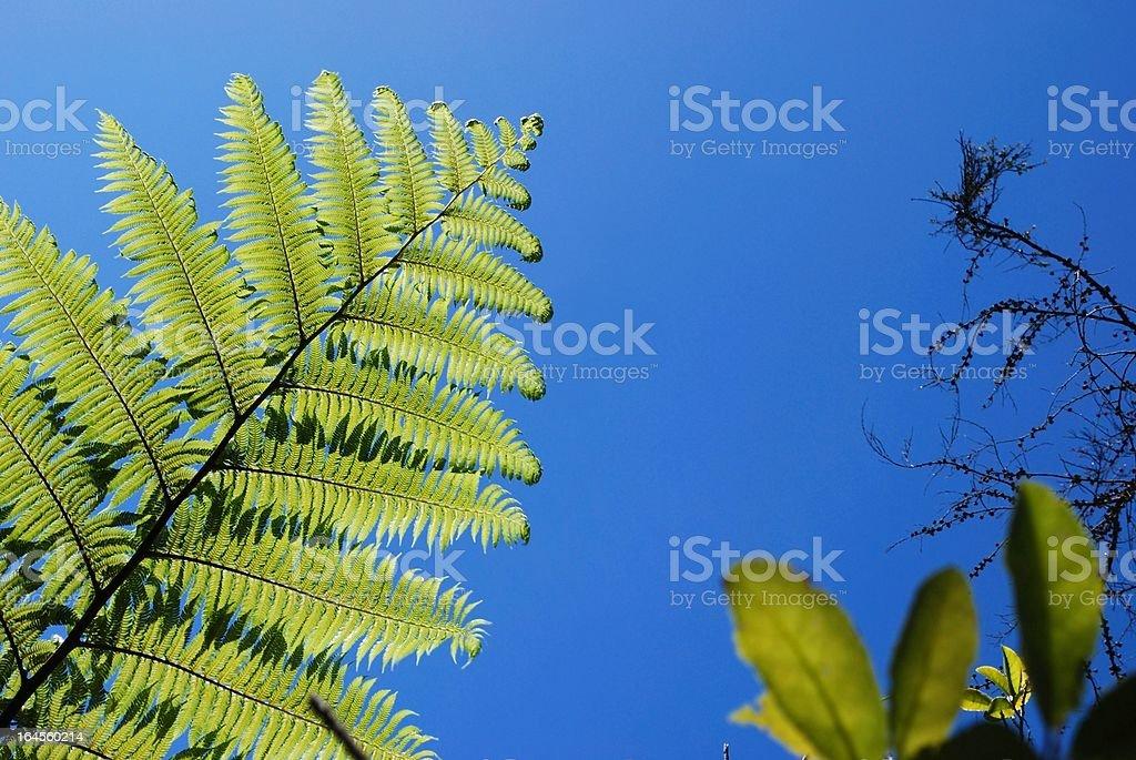 New Zealand Punga Fern & Sky stock photo