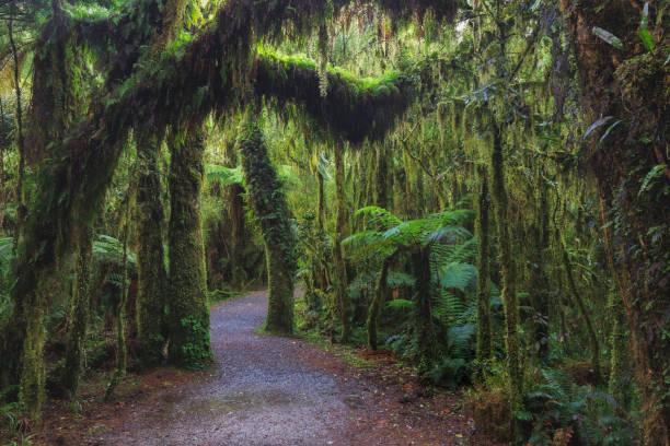 New Zealand rainforest details landscape stock photo