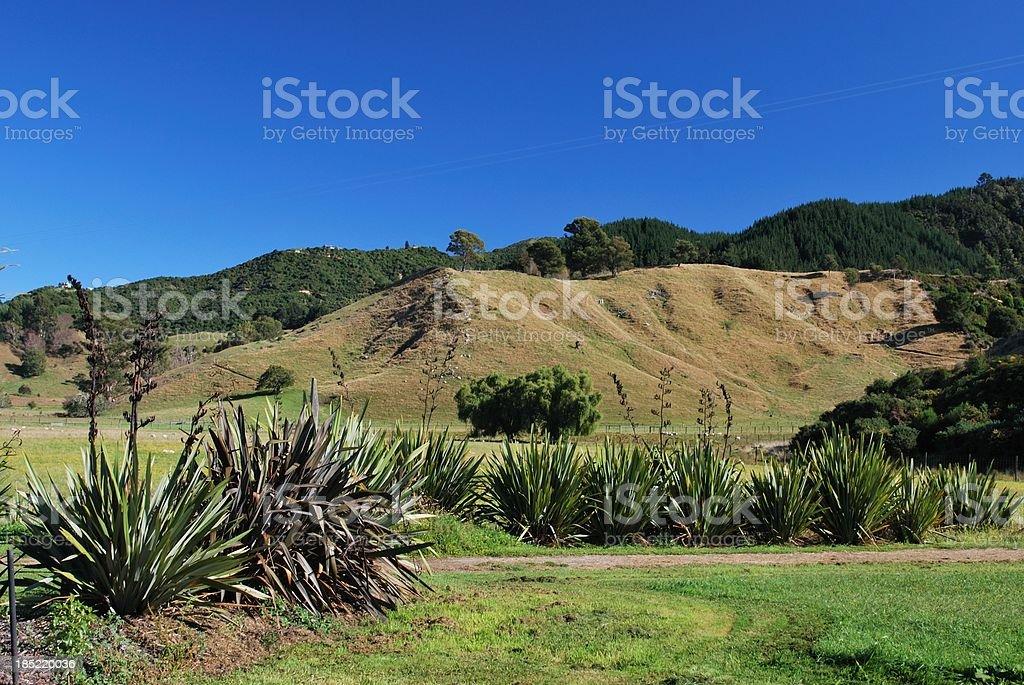 New Zealand Rural Landscape stock photo