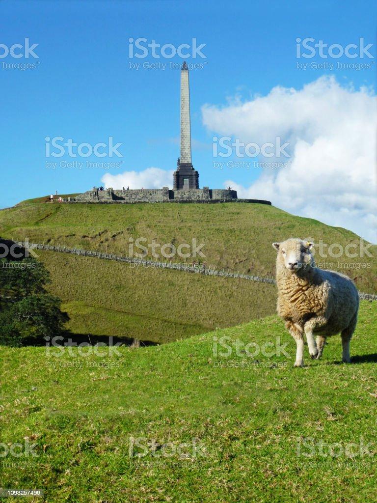 A NZ sheep posing in Cornwall Park, popular public garden in central...