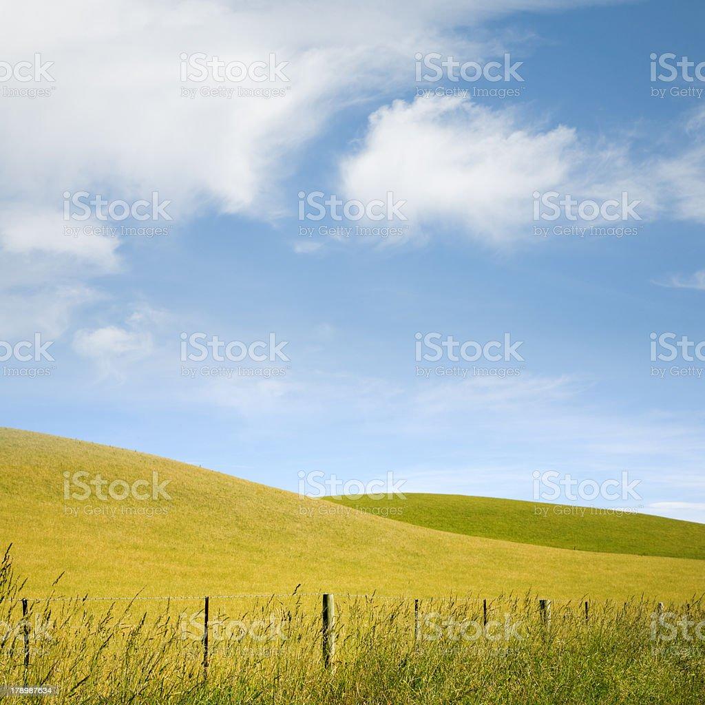 New Zealand Summer Landscape Rolling Hills Fenceline royalty-free stock photo