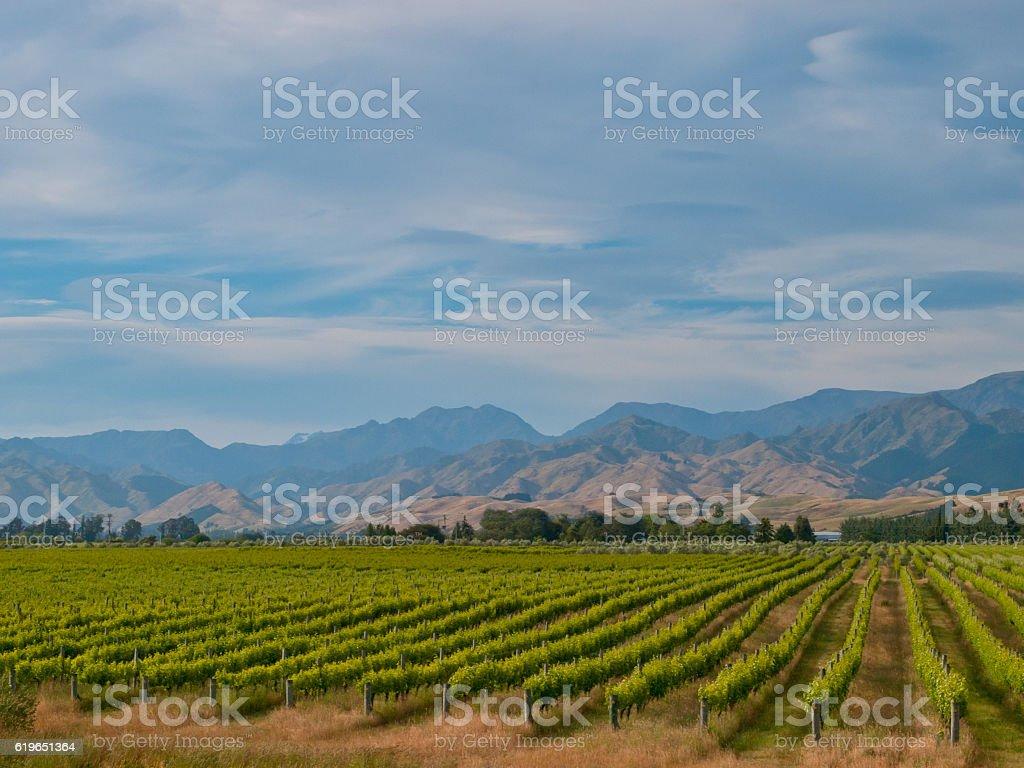 new zealand vineyard blue hills stock photo
