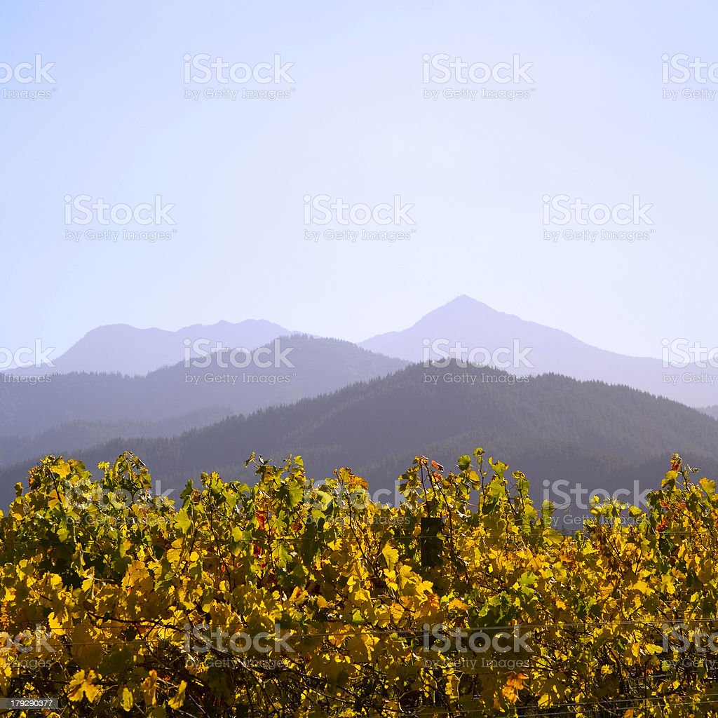 New Zealand Vineyard in Autumn royalty-free stock photo