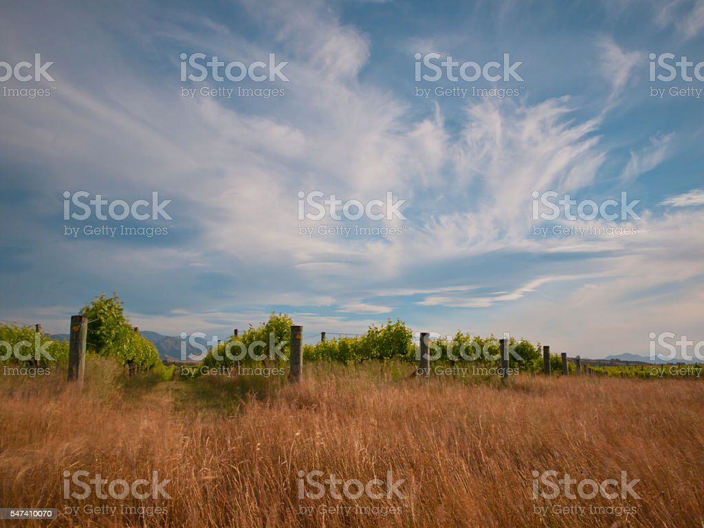 new zealand vineyard long exposure stock photo