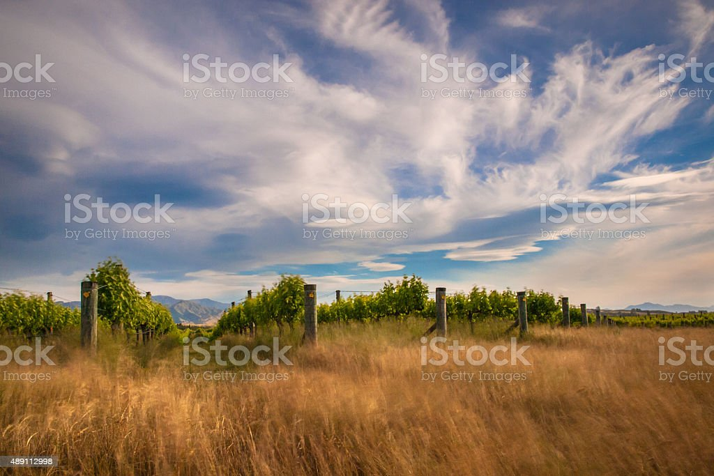 new zealand vineyard near Blenheim long exposure stock photo