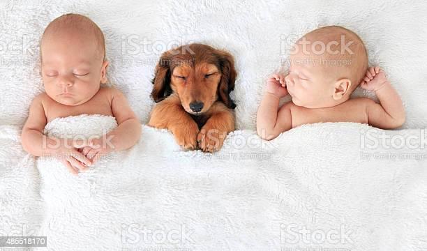 Newborn baby and puppy picture id485518170?b=1&k=6&m=485518170&s=612x612&h= ubprhojlryxrug90krkbta bckf  ieo2b2nwx8 ks=