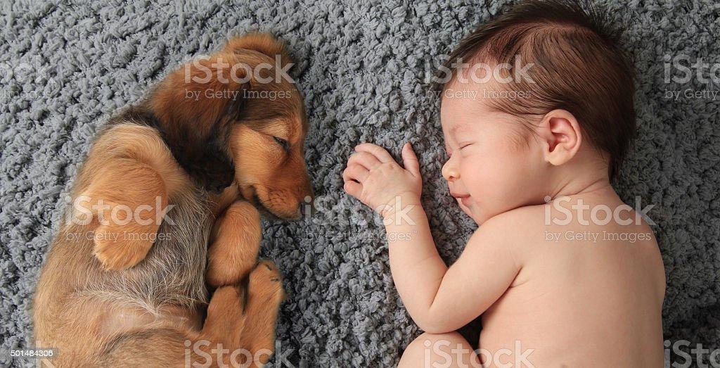 newborn baby and puppy royalty-free stock photo