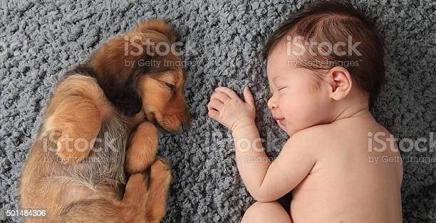 Newborn baby and puppy picture id501484306?b=1&k=6&m=501484306&s=612x612&h=hdsnjk3ik2xkeyv41crxzruiaizjxoqjhpy11tlov14=