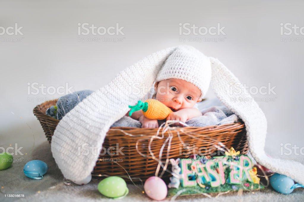 hasen baby bilder  malvorlagen gratis