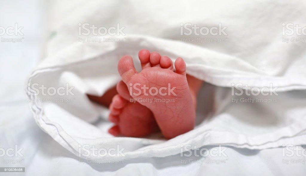 Newborn baby feet. stock photo