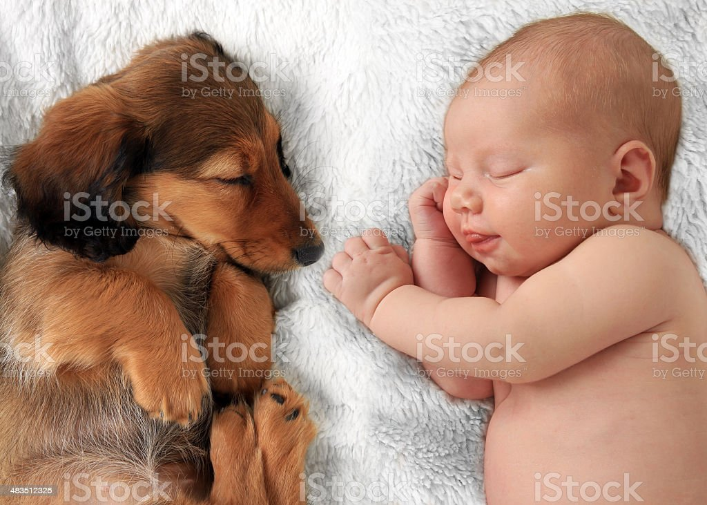 Newborn baby girl asleep on a white blanket next to a dachshund puppy.