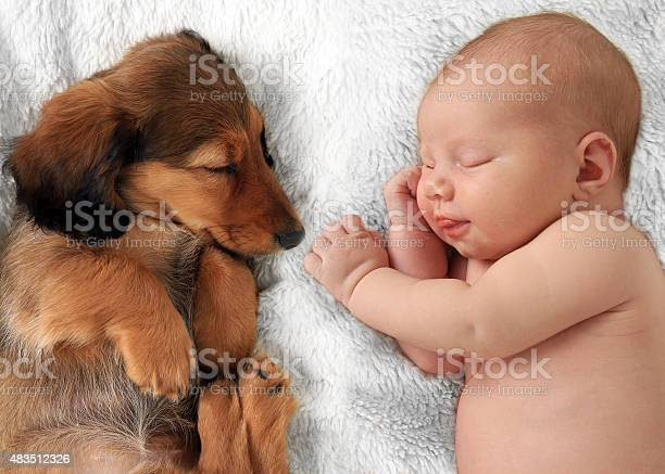 Newborn baby girl and puppy sleeping together picture id483512326?b=1&k=6&m=483512326&s=612x612&h=bmb fyuj4u2dyq51inuexslwirltcdt0tm6fslgpmd8=