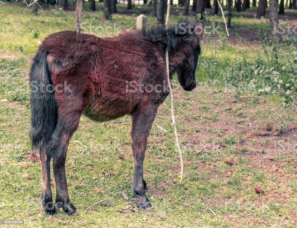 Newborn Baby Horse On A Farm Stock Photo Download Image Now Istock