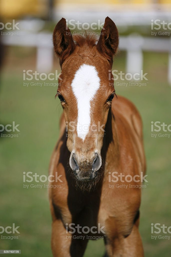 Newborn Baby Horse Stock Photo Download Image Now Istock