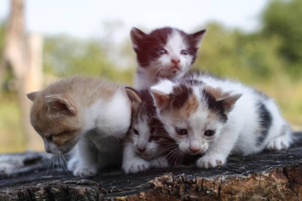 Newborn cats play in nature a kitten at a young age for the first in picture id1253537828?b=1&k=6&m=1253537828&s=612x612&w=0&h=feefj4ejfshz1xe7 sdkr6sglpsscjl2eme6gndu7ku=