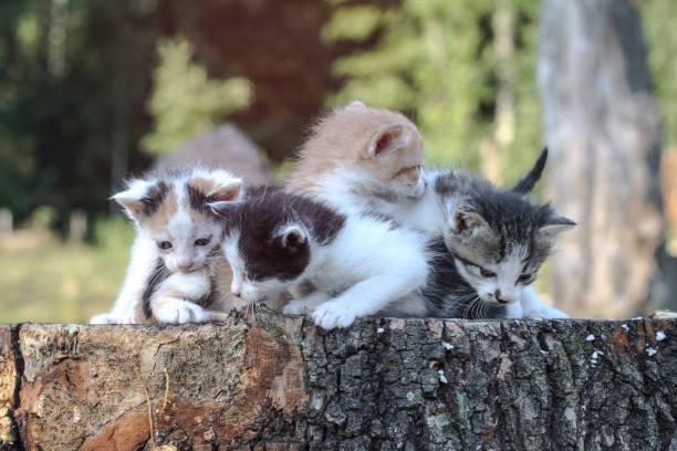 Newborn cats play in nature a kitten at a young age for the first in picture id1253537936?b=1&k=6&m=1253537936&s=612x612&w=0&h=webhf6y7xr mwmlwbvjllq9aznw0ttb5usvtr5vc93e=