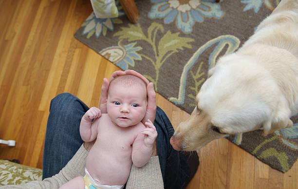 Newborn Girl and her Dog A newborn girl being smelled by her Labrador retriever. newborn animal stock pictures, royalty-free photos & images