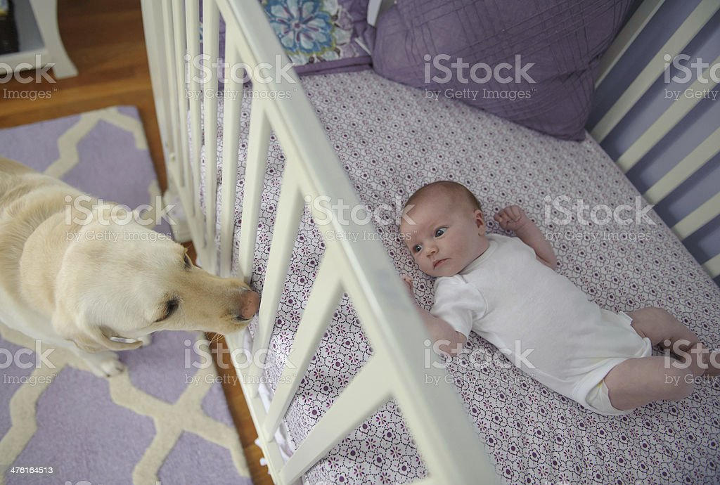 Newborn Girl and her Dog royalty-free stock photo