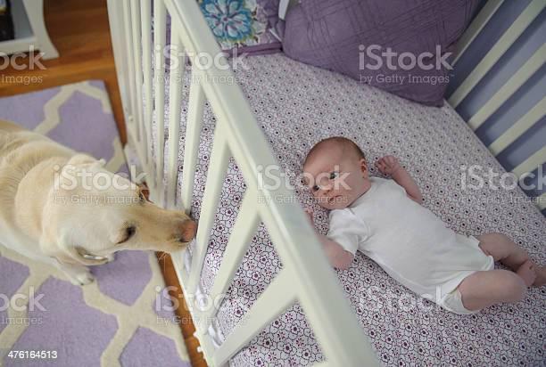 Newborn girl and her dog picture id476164513?b=1&k=6&m=476164513&s=612x612&h=3ilzpnylgibiqakrrdyeh57m fgnbhwmkevpxwzrvmg=