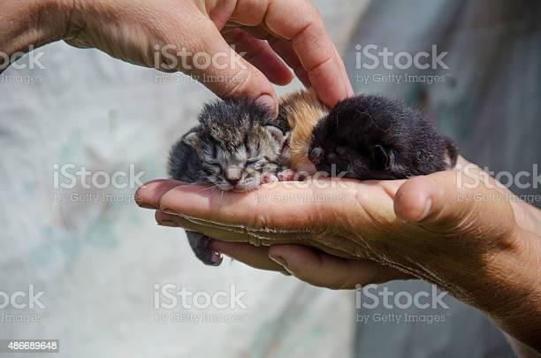 Newborn kitten in hand picture id486689648?b=1&k=6&m=486689648&s=612x612&h=15ib0oefp6axsymch0tcjaf ysdrzipaioy5l6v9wqm=