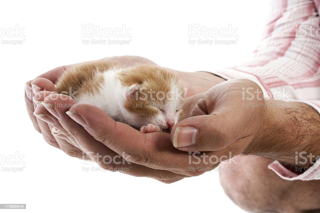 Newborn kitten royalty-free stock photo