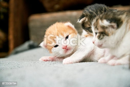 Multicolored  newborn kittens lying on a blanket.