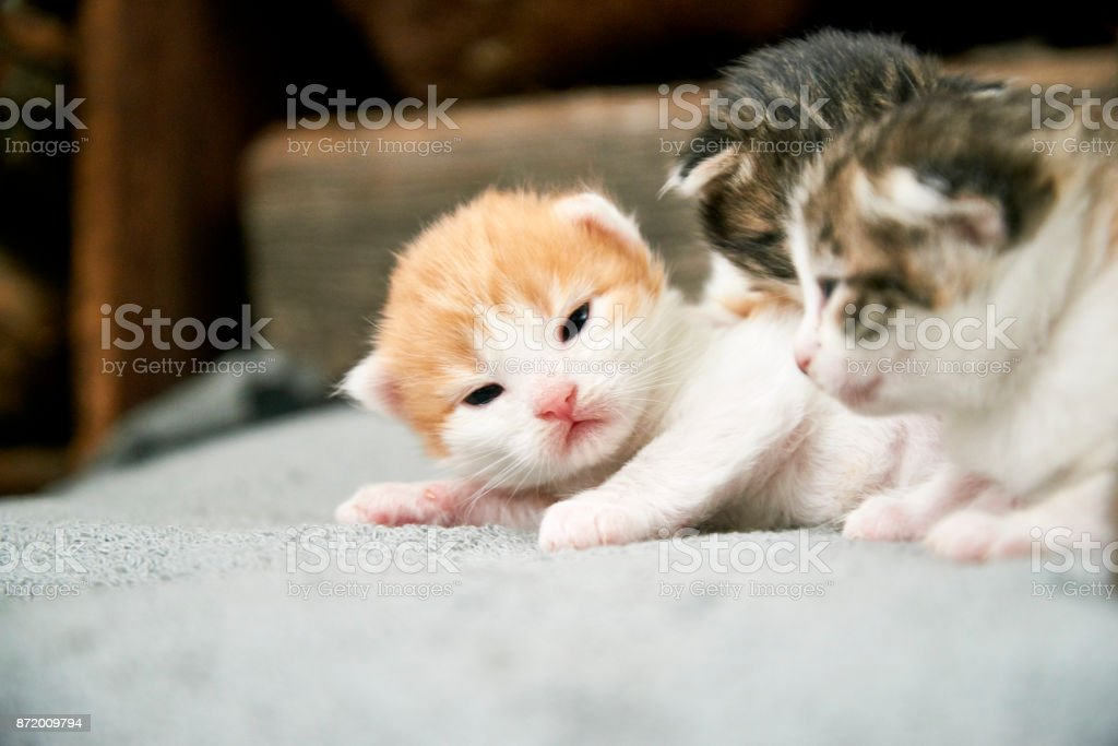 Newborn kittens. stock photo
