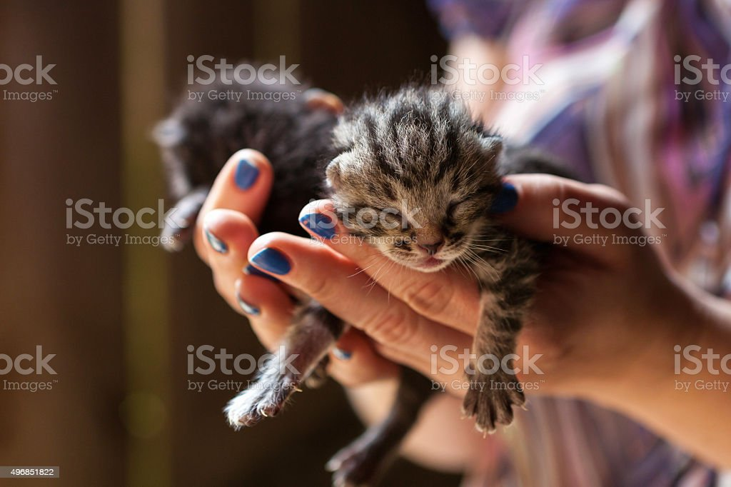 Newborn kitty on human's hand stock photo